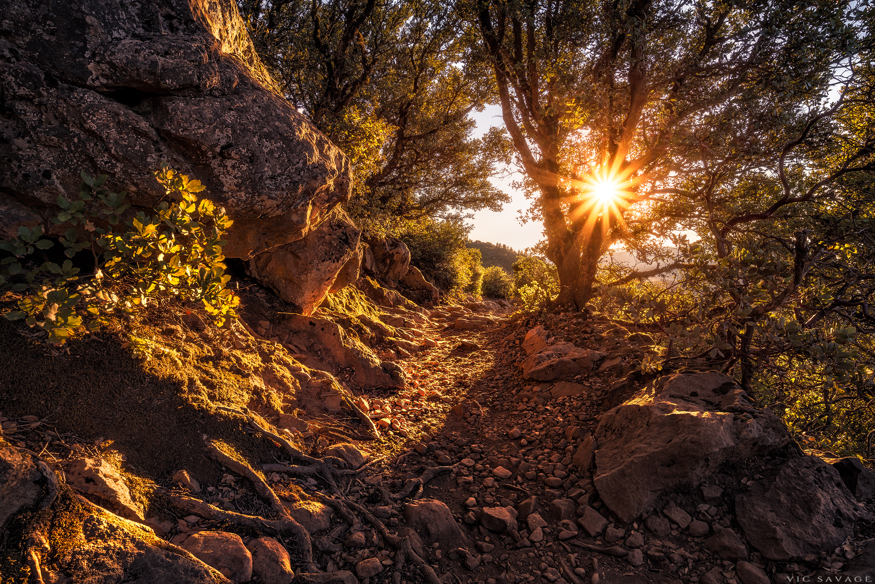Mount-Tam-Sun.jpg