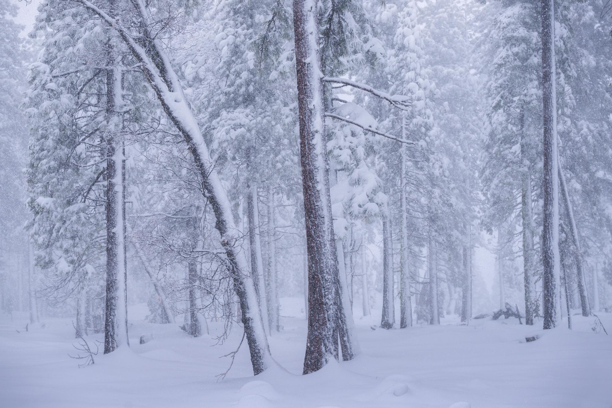 Narnia's-Winter.jpg