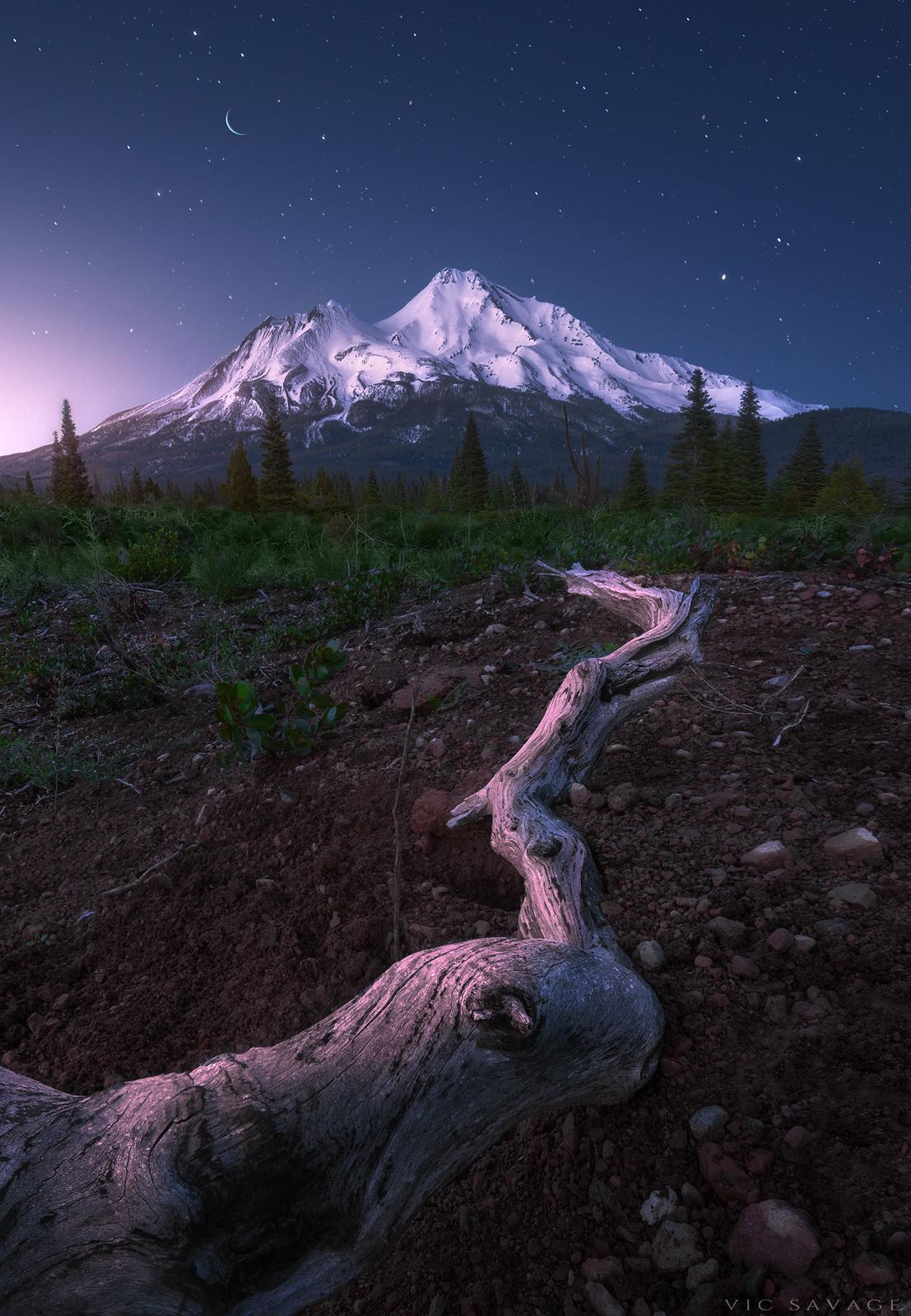 Shasta-Dream.jpg