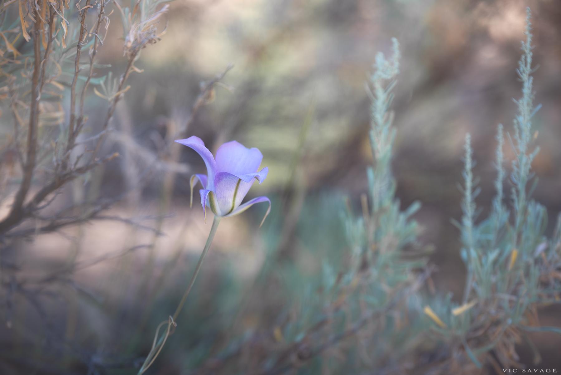 Smith-Flower.jpg