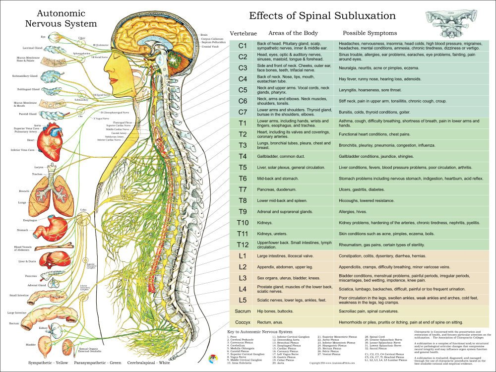 Nervous System | Best Chiropractors in Orange County | Chiropractor Lake Forest.png