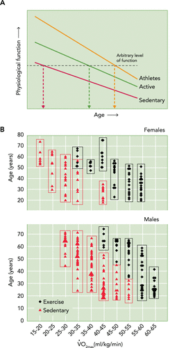 Oxygen capacity over lifespan - trajectory for active individuals does not dip to sedentary values