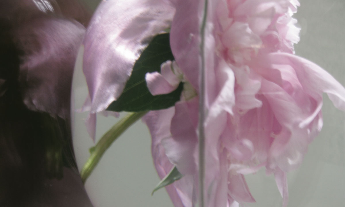 The Transparent Universe  (Peony), 2006, cibachrome, 30 x 40 inches