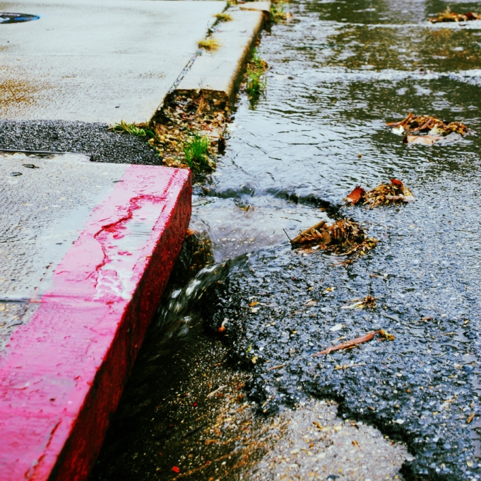 Polluted runoff drains off our streets and directly into streams.