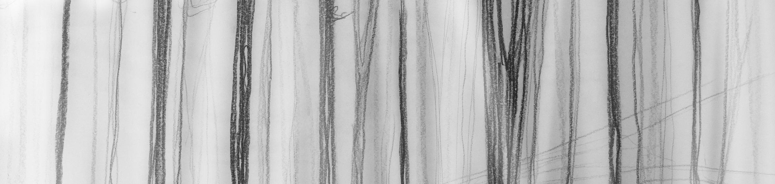 fog forest.jpg