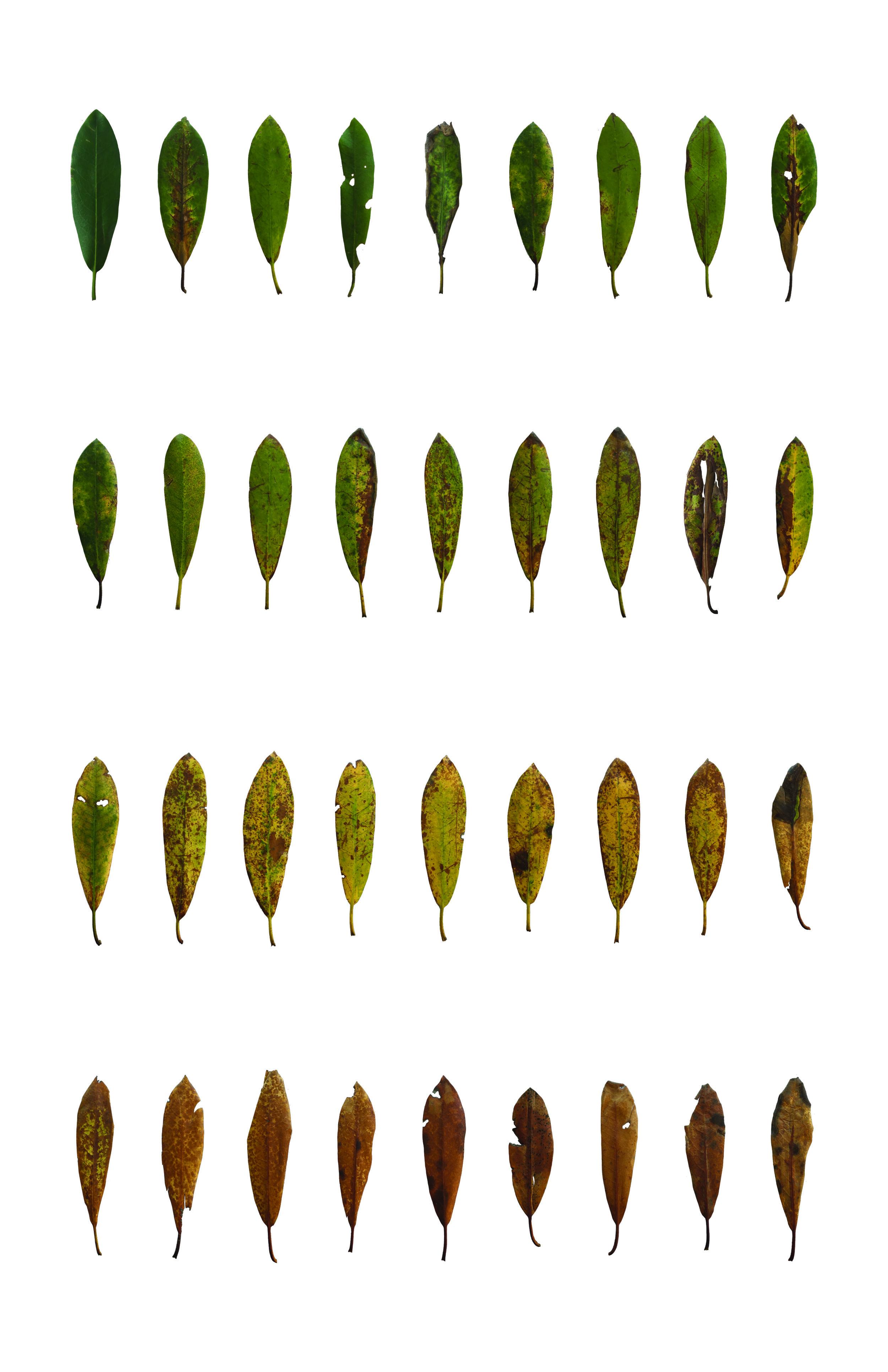 leaf poster RESIZED.jpg