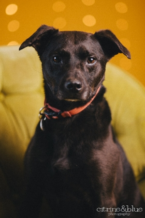 Baxter's photo taken by Bob Libby