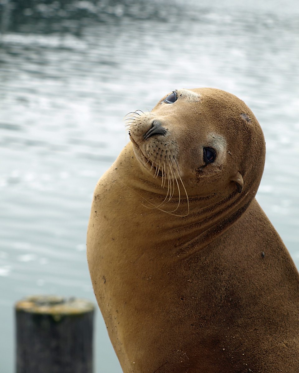 SEAL OF APPROVAL, central California.
