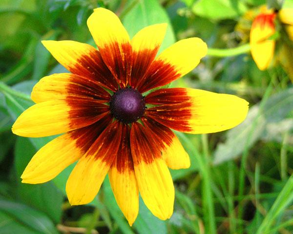 SUNSHINE FLOWER