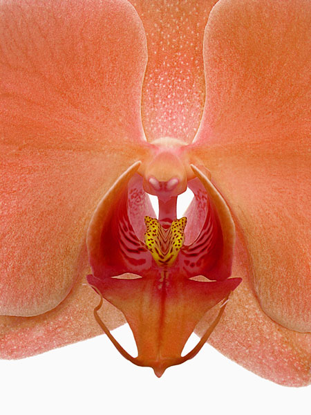 DOUBLE-TAKE ORCHID.  This photo always gets attention.