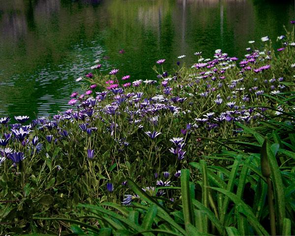 FIELD OF FLOWERS 2