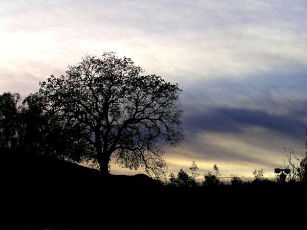 OLD ROAD OAK 2, Stevenson Ranch, California.