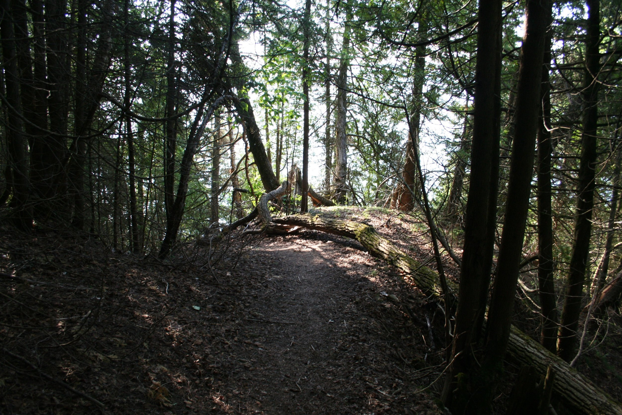 Un paysage de forêt, dans le nord du Québec (2015)