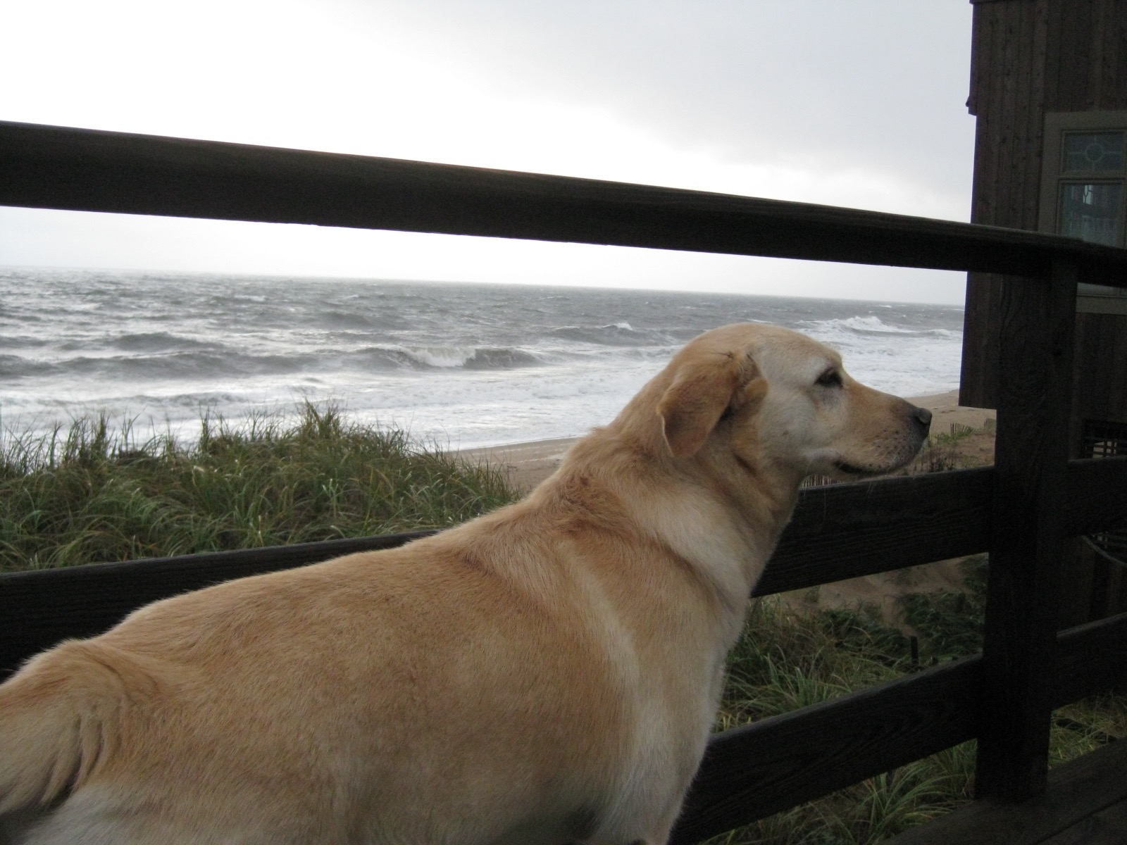Lola à la mer