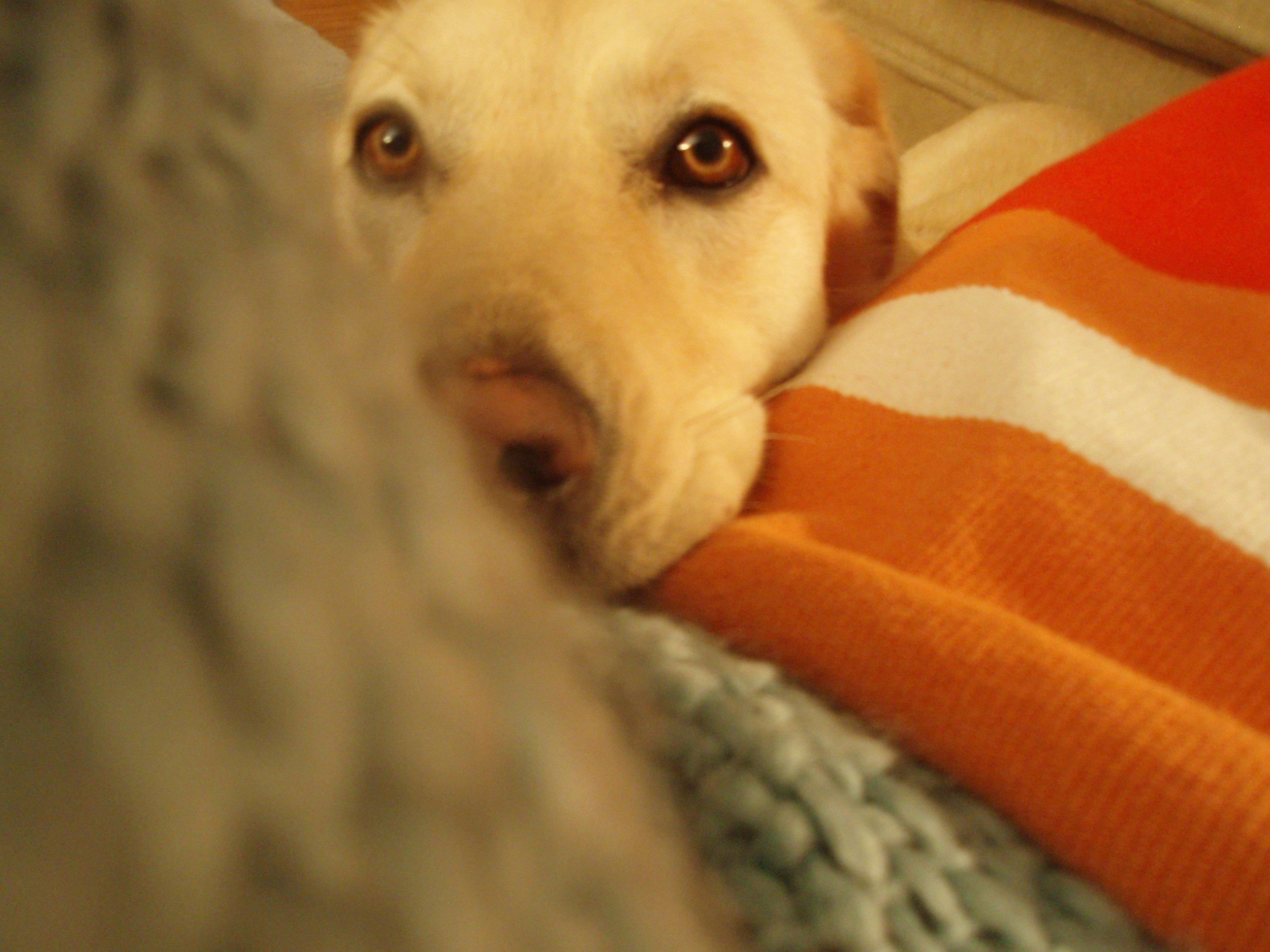 Lola qui fut la meilleure compagne au monde (2012)