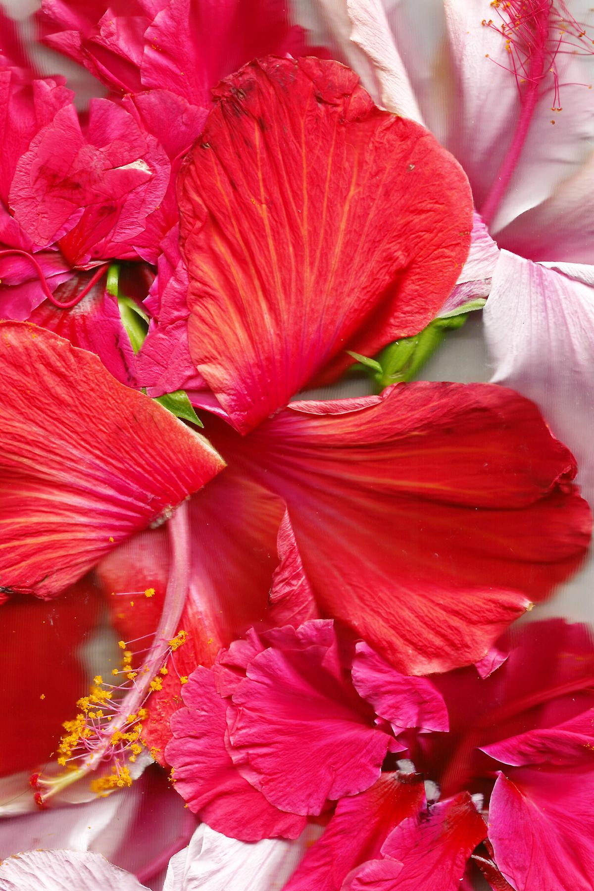 tropical-sml.jpg