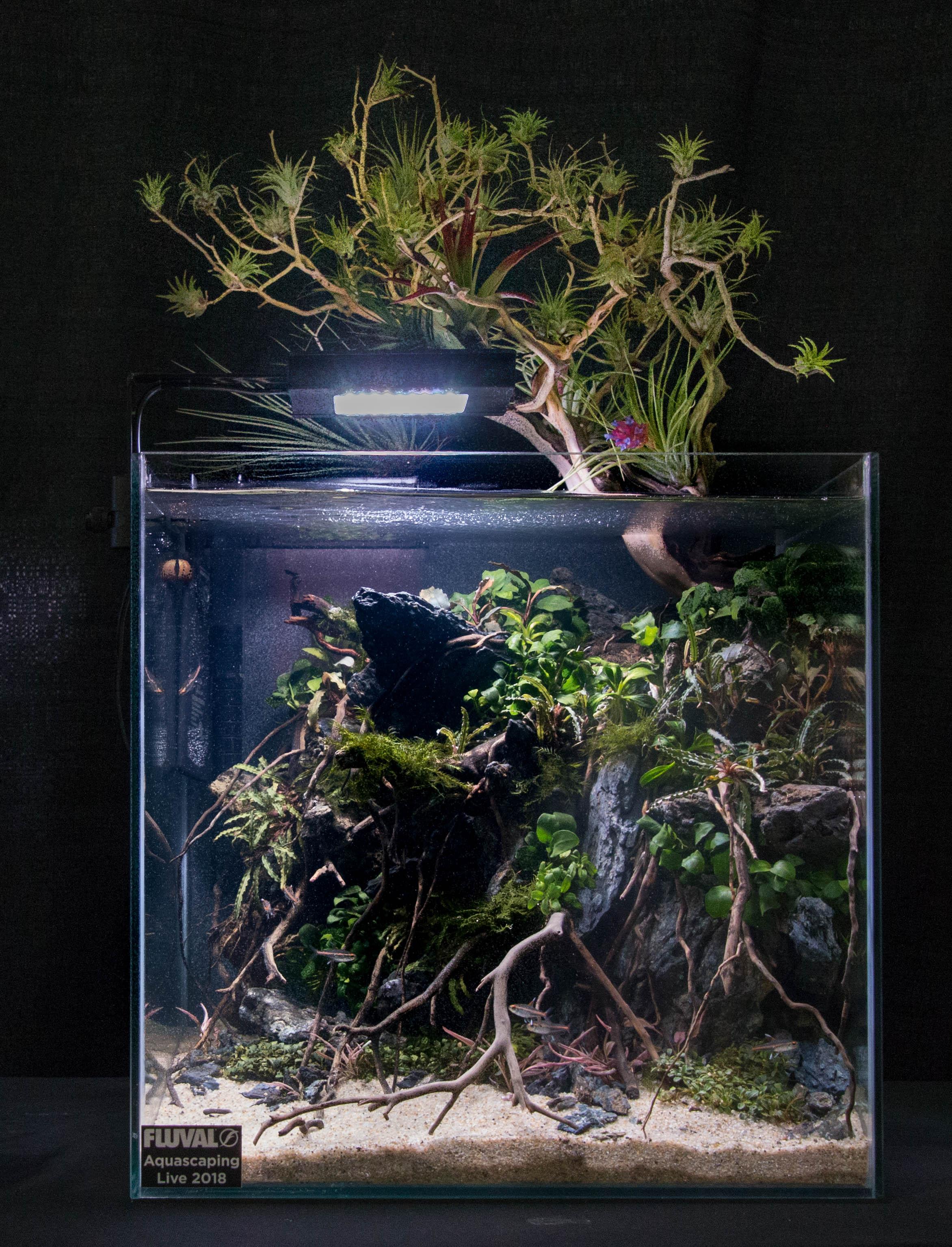 4th place. Tank by Han Tran. Photo by Karen Randall