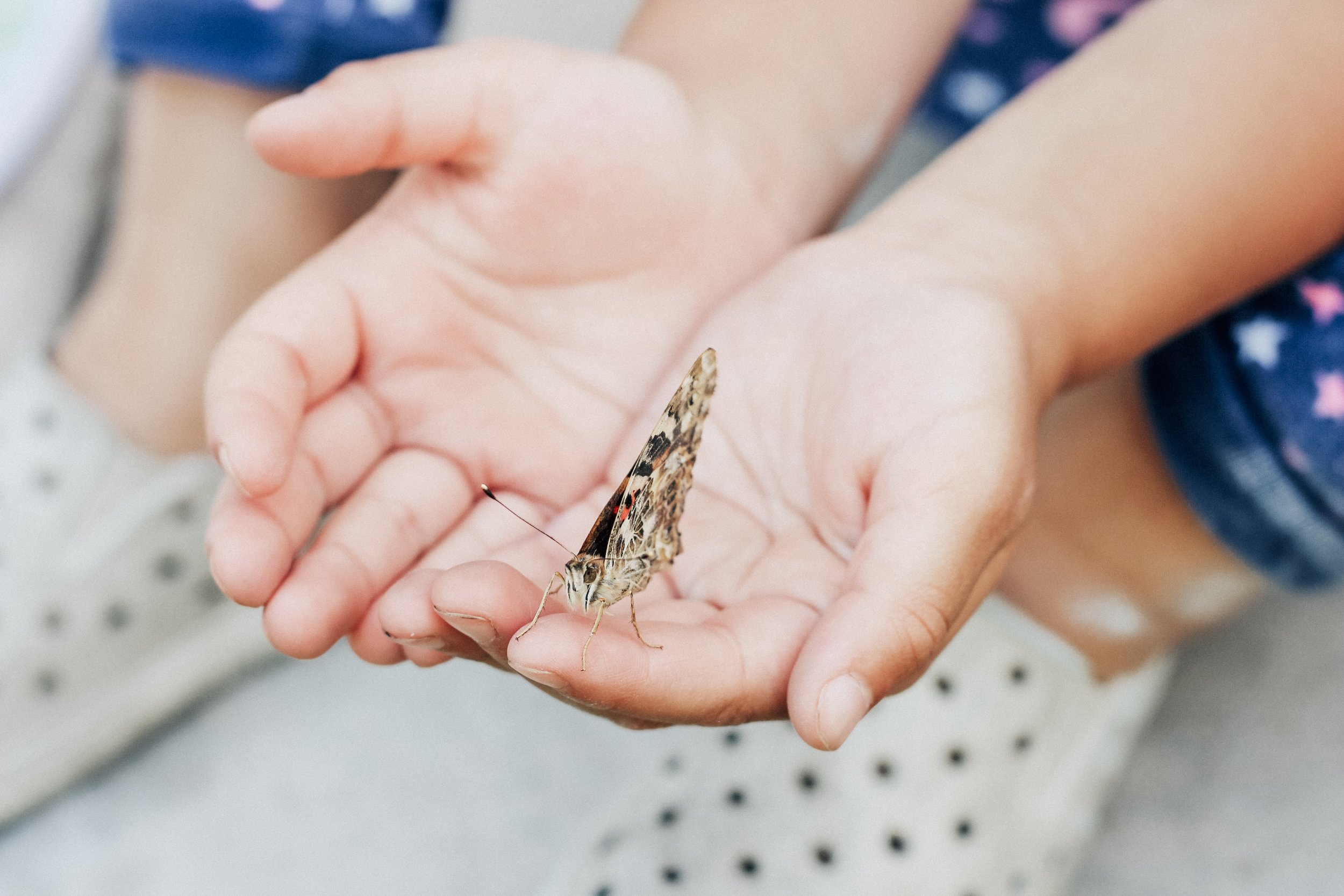 Children will have the opportunity to have their own caterpillars and observe their life cycles as they transition into a butterfly in their own home! Read more about what we incorporated in our last bug unit by clicking  here !