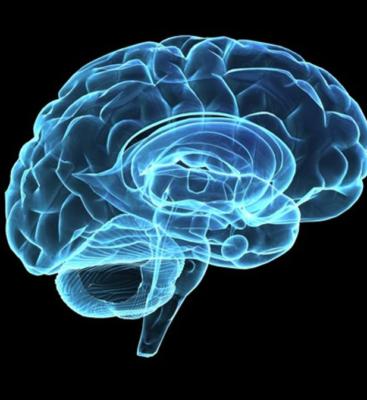 brain-367x400.png