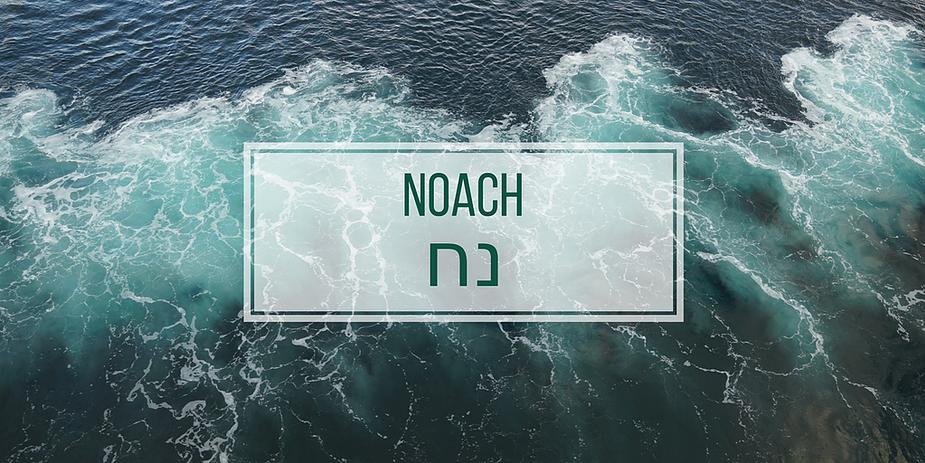 NOACH.png