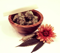 learn how to navigate a dispensary