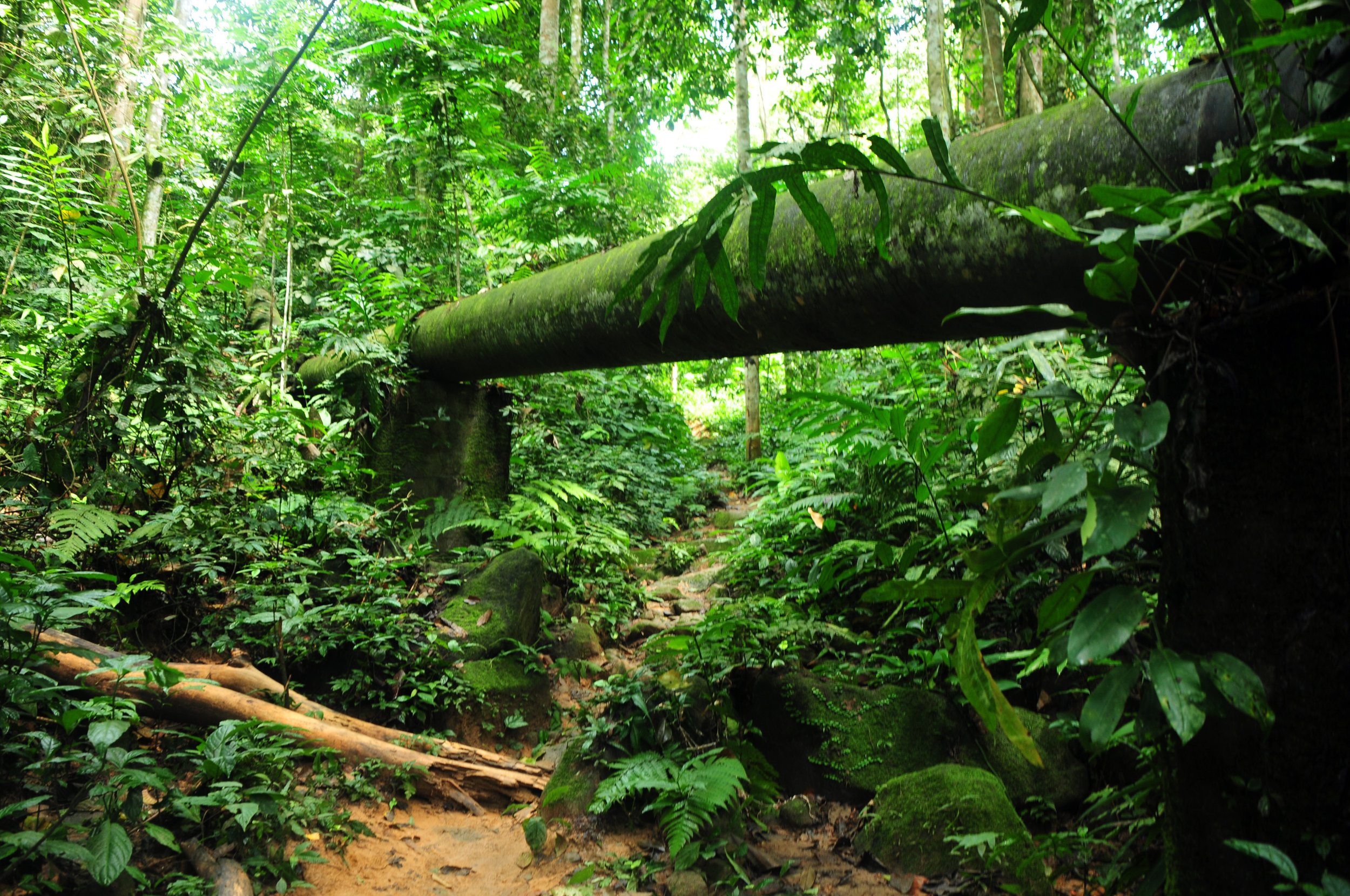 Jungle-River.jpeg