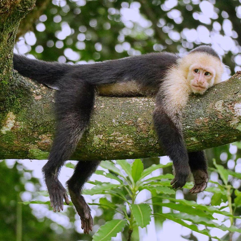 Jungle Sleep.jpg