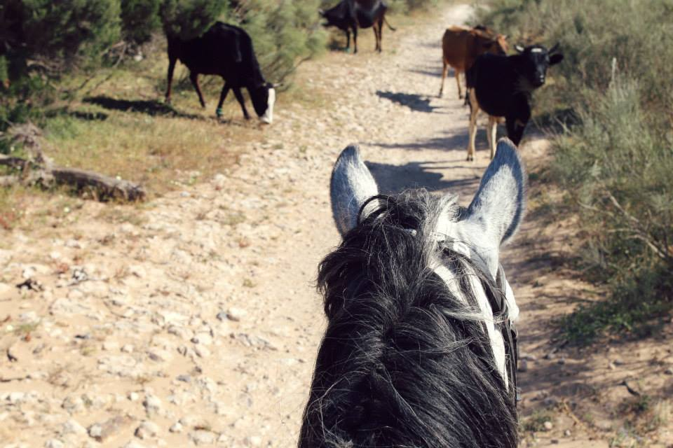 The view from my lovely horse Mogador, riding among olive and argan trees