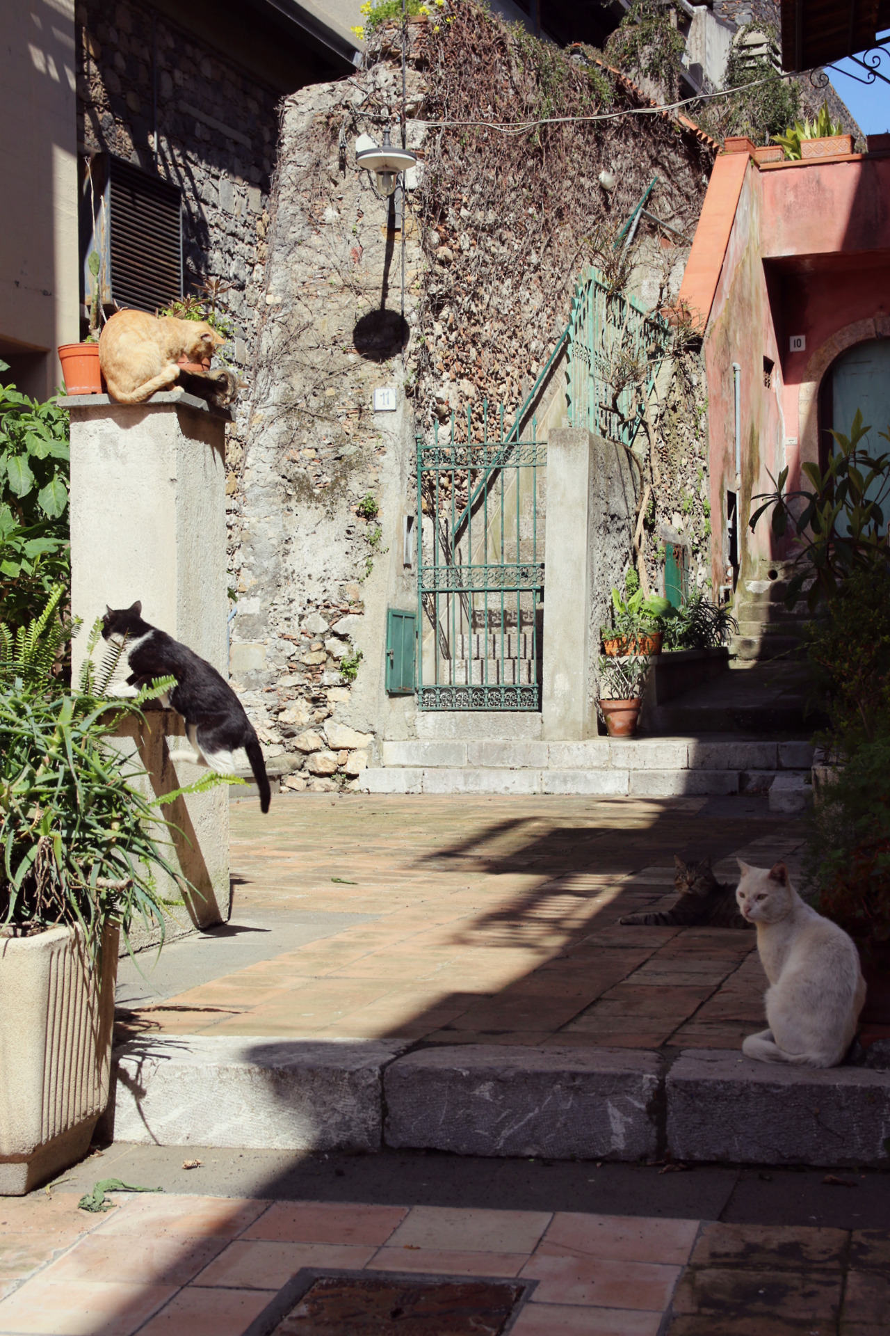 Cats in the sun... what's not to love?