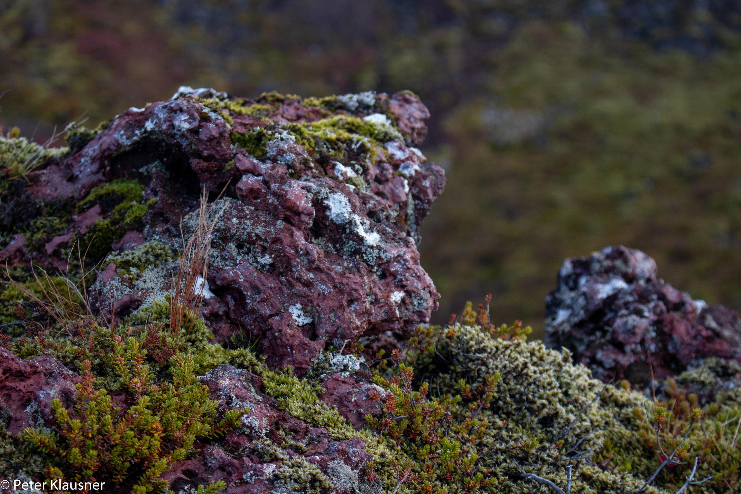 IcelandWebsite-2.jpg