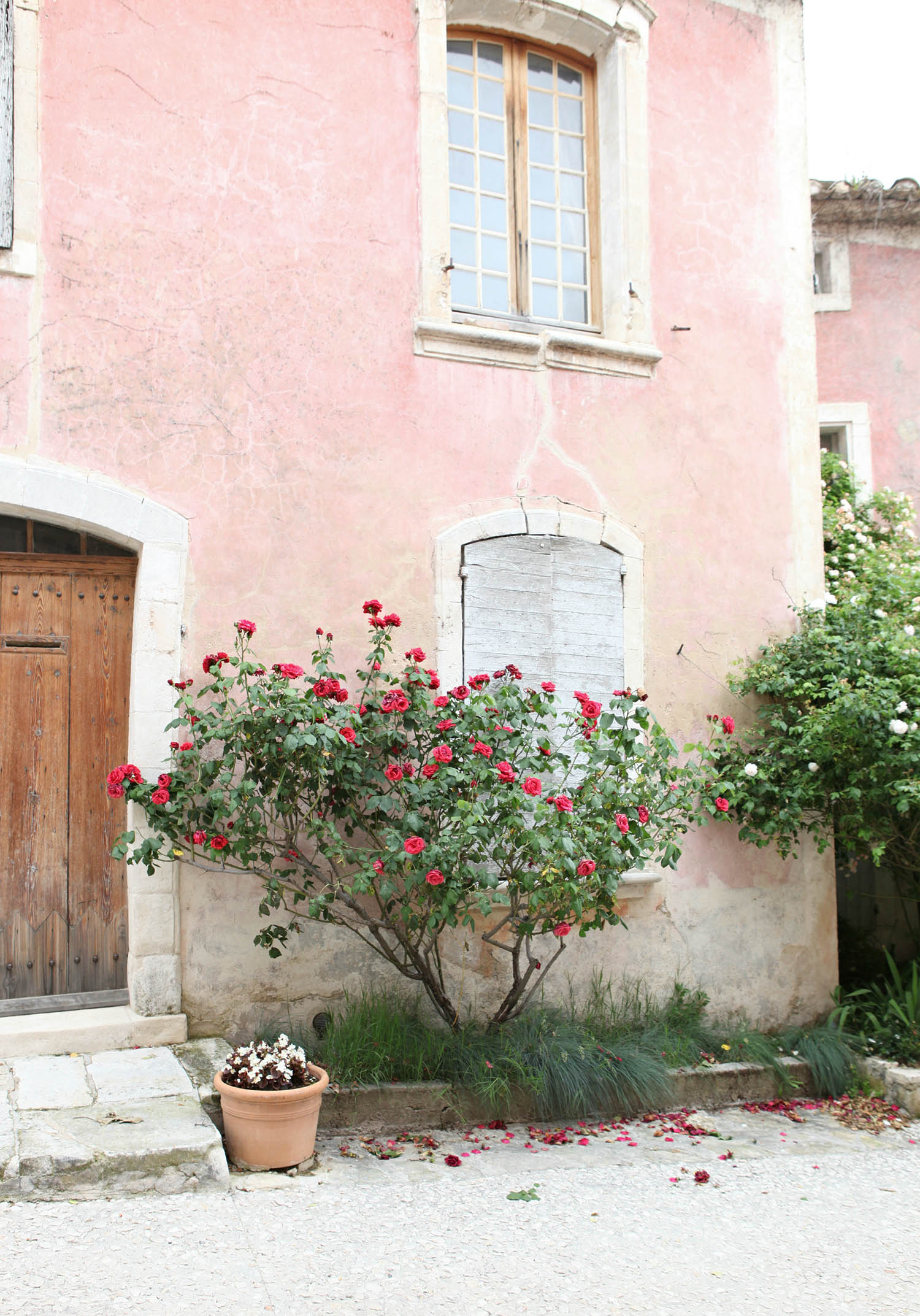 provence-pink.jpg