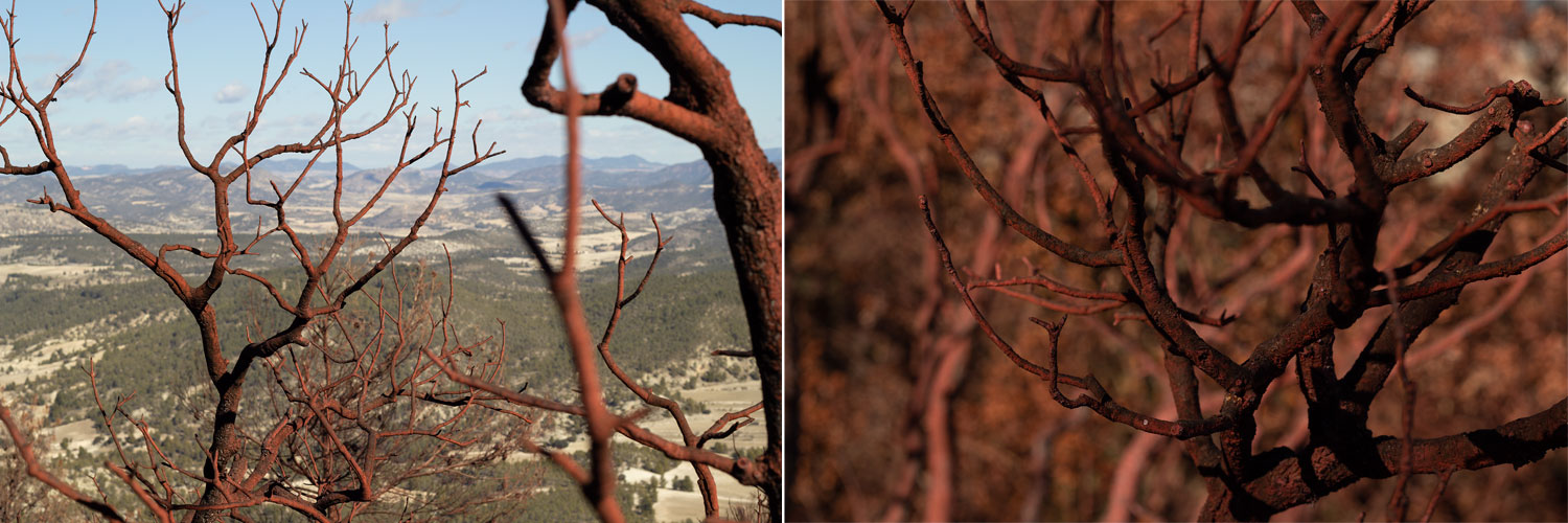 Forest fire aftermath photographs  (framed c-type prints, edition of 2)