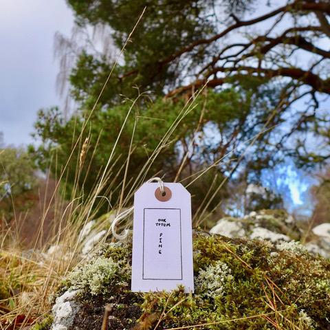 1.1. AF Our totem pine-6x6.jpeg