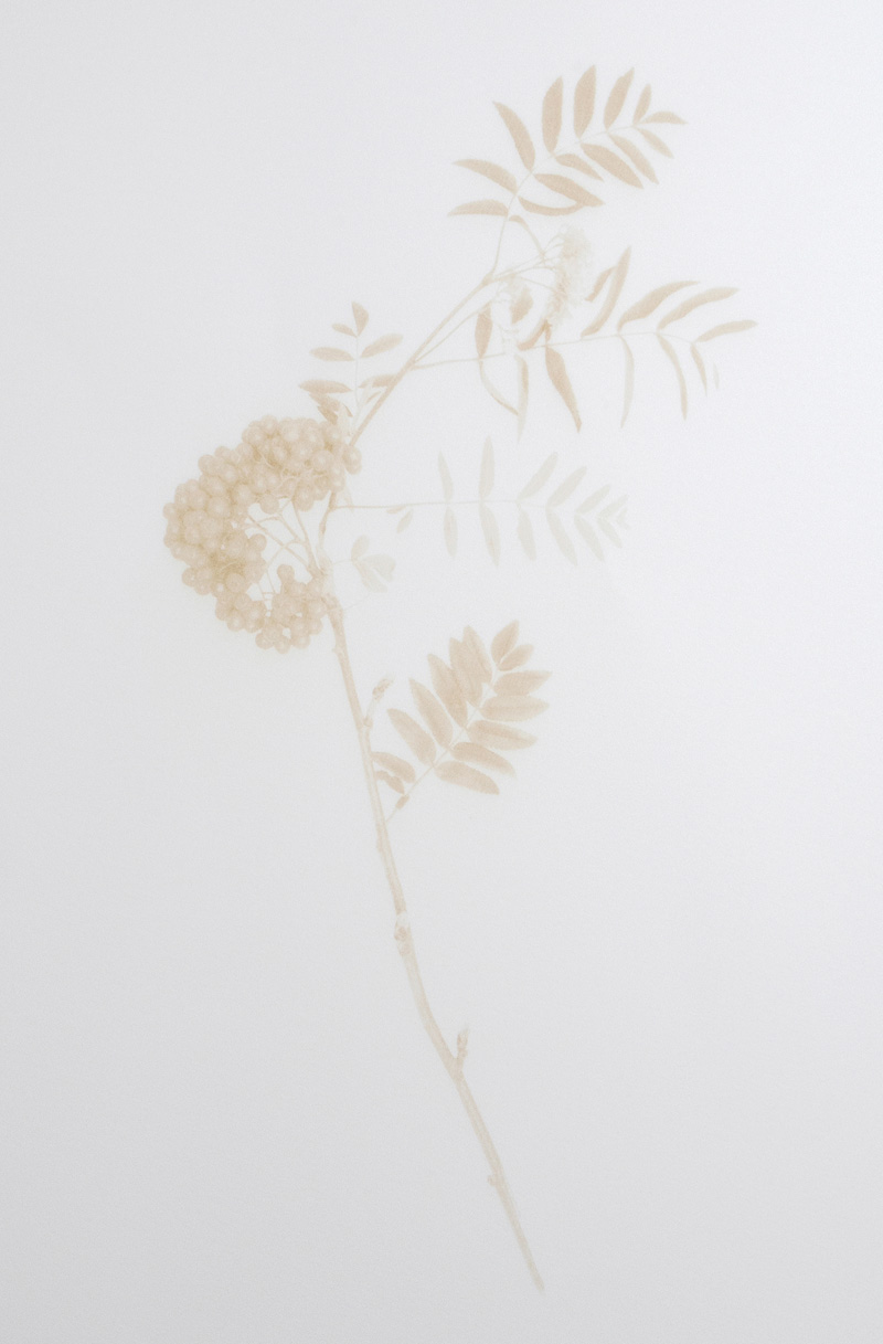 Jenny Smith ,  Rowan , laser engraved print, 2018.