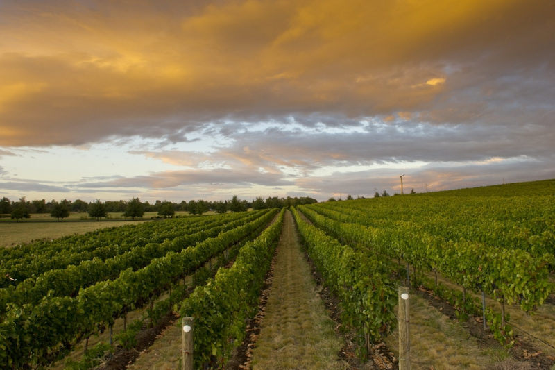 Loess Vineyard, Walla Walla