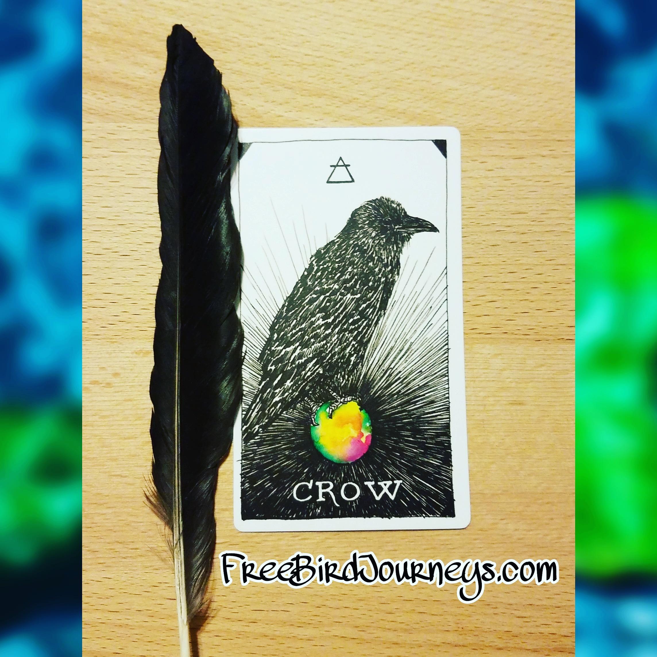 Crow2018.jpg