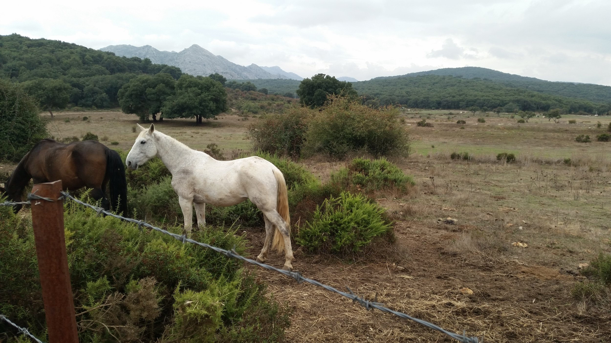 Richard Tobin Horse.jpg