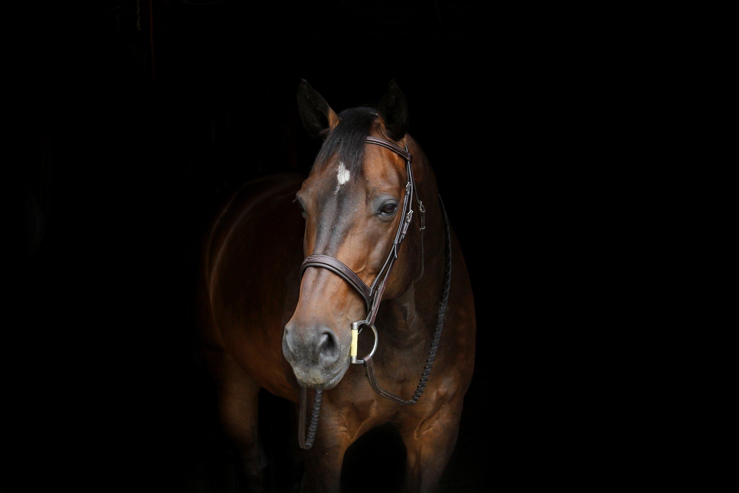 HorsePortrait.jpg