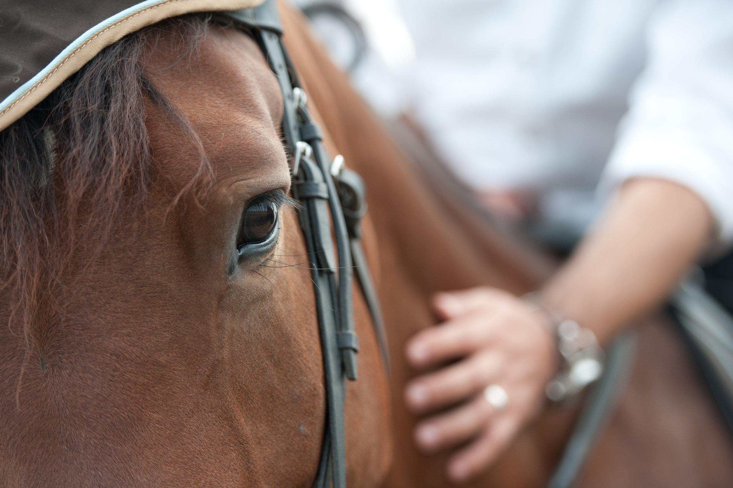 Hand on Horse.jpg