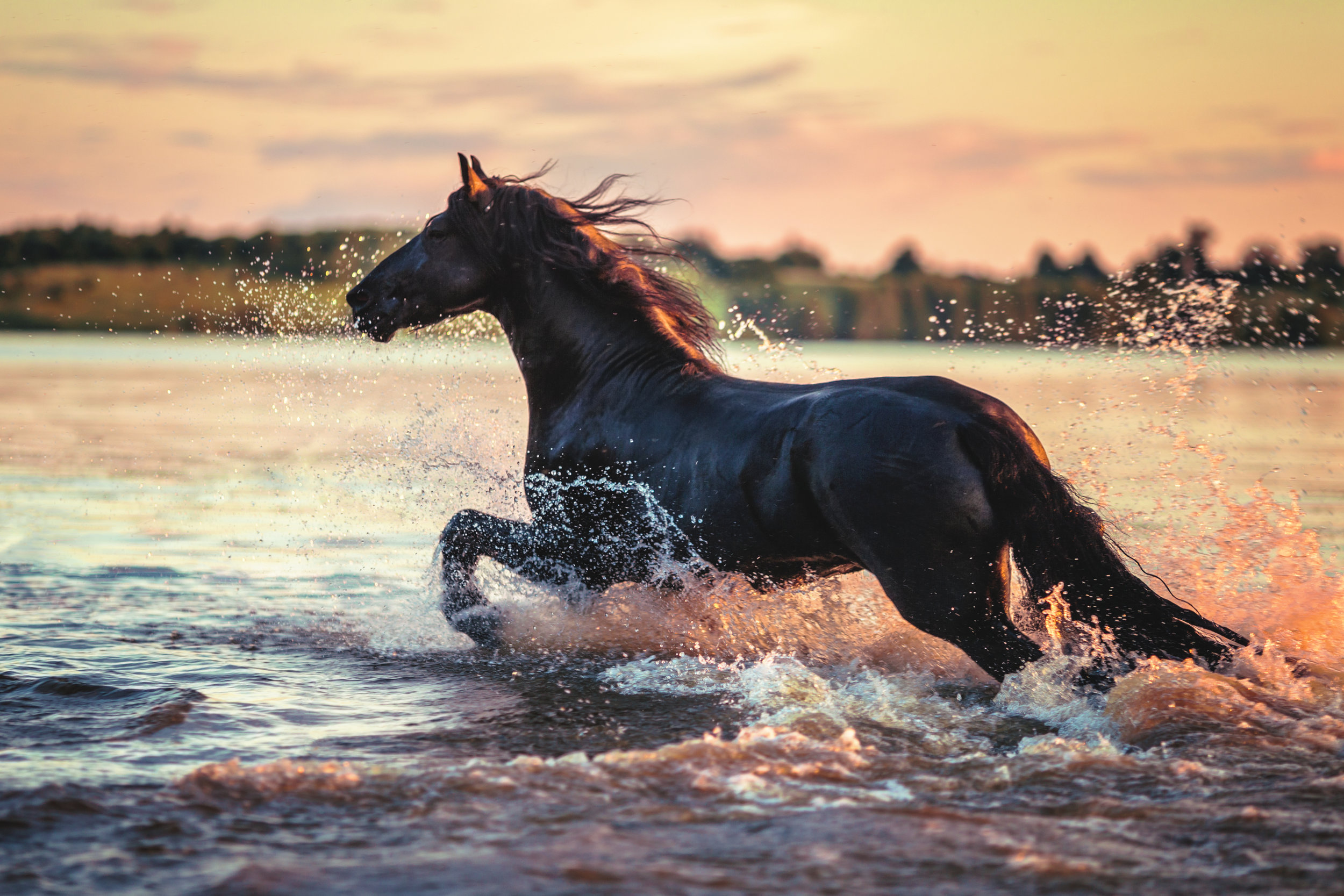 "Horses - ""There is a level of consciousness that the horses have, where they can give to us in a way that we haven't even begun to imagine, something far greater than anything that anyone has ever been able to speak about."" Gary Douglas"