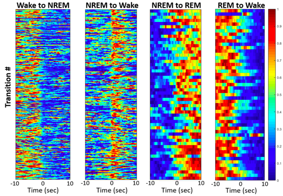 Population activity of GABA neurons within the lateral hypothalamus (LH) varies by arousal state. These are heat maps showing the relative activity of VGAT-Cre neurons in the LH during transitions between different states (NREM sleep, REM sleep, and wakefulness) (Image Credit: JCB) (Note: These data are preliminary and subject to change, any use without the author's consent is forbidden).