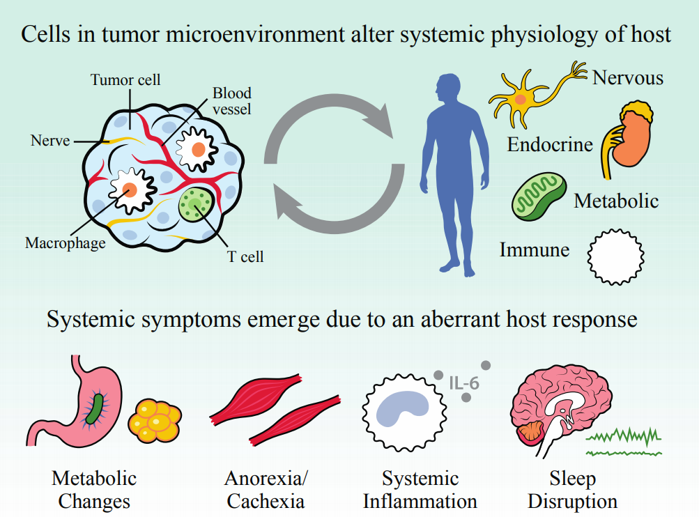 Tumors interact with their local environment and by extension, the whole organism . These interactions can result in deleterious outcomes for patients, like tumor progression, metabolic problems, anorexia, inflammation, and sleep/circadian disruption. Magnon and colleagues provide evidence that in addition to these established pathways, neural progenitor cells leave the brain and migrate to the tumor (in a model of prostate cancer), promoting cancer growth and progression. (credit:   Walker II & Borniger, 2019   ) .