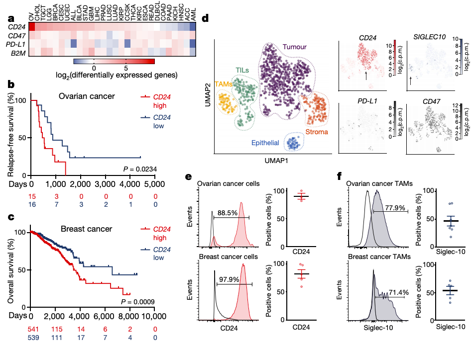 Figure 1 : CD24 is widely expressed in many forms of cancer (in panel a), and its expression in ovarian and breast cancer is associated with poor prognoses (panels b and c). Additionally, CD24 is primarily expressed by tumor cells while Siglec-10, the binding partner for CD24, is primarily expressed by macrophages in the tumor microenvironment.