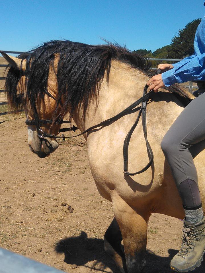 horse 1.jpg
