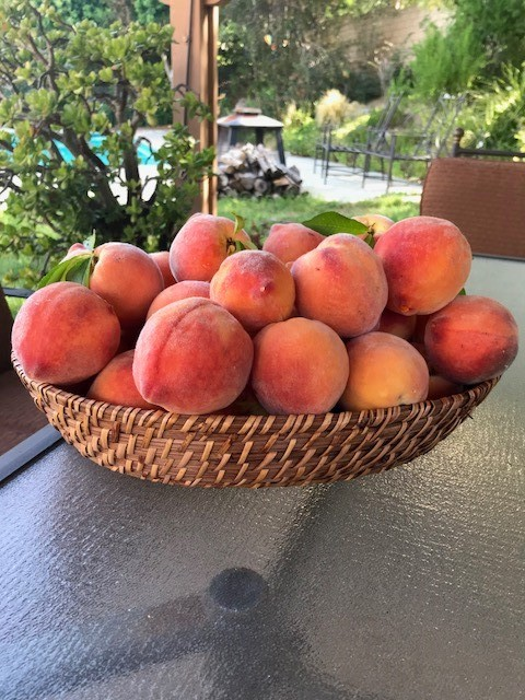 Marie Osgood, In-Home Support Services, grows peaches.