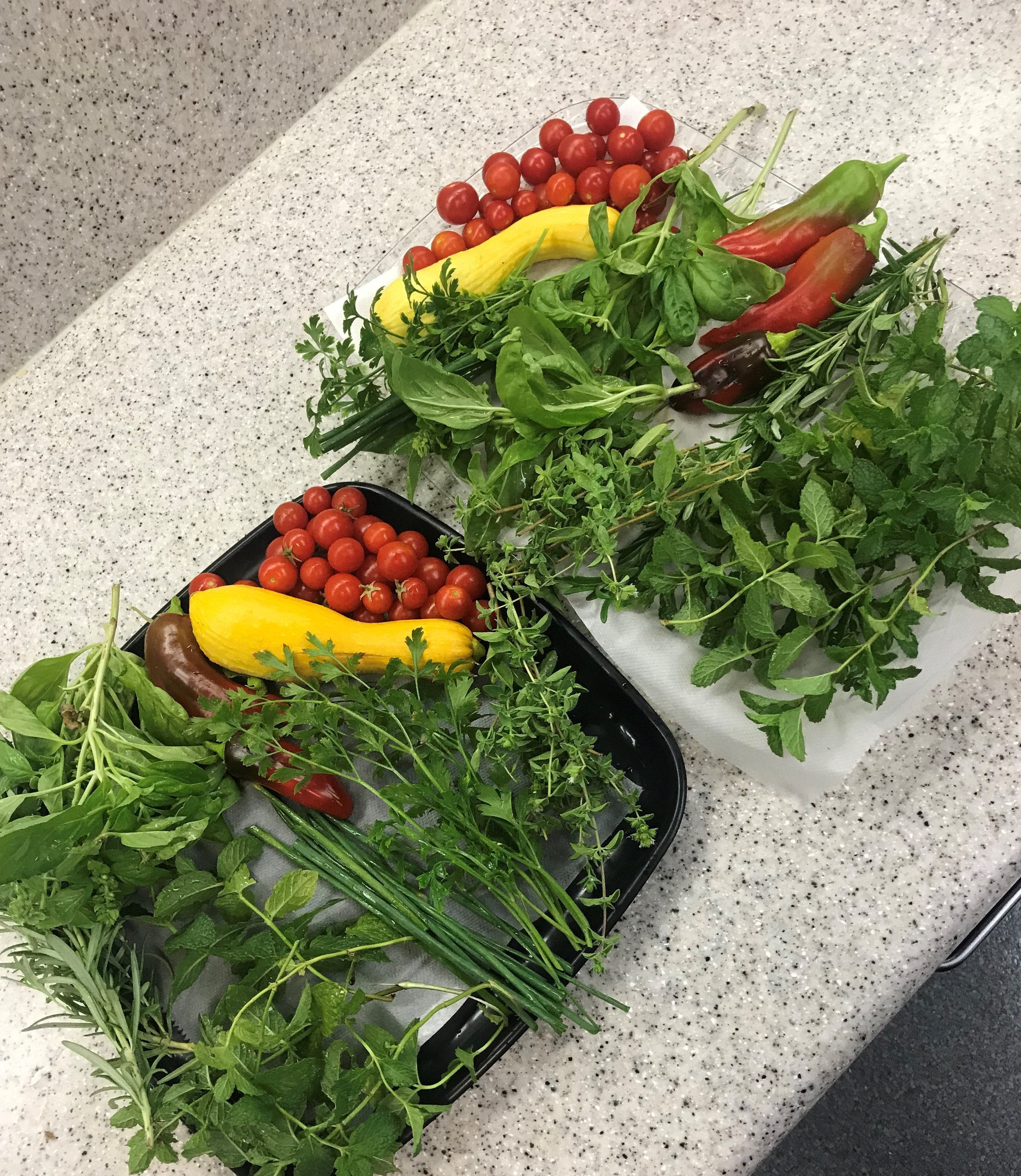 Melissa Keane, Epidemiology and Immunization Services, grows squash, tomatoes, peppers and herbs