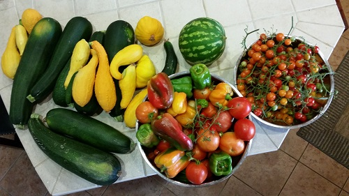 Stephen Amberg, Air Pollution Control District, grows various squash, zucchini, watermelon, Tomatoes and a variety of peppers