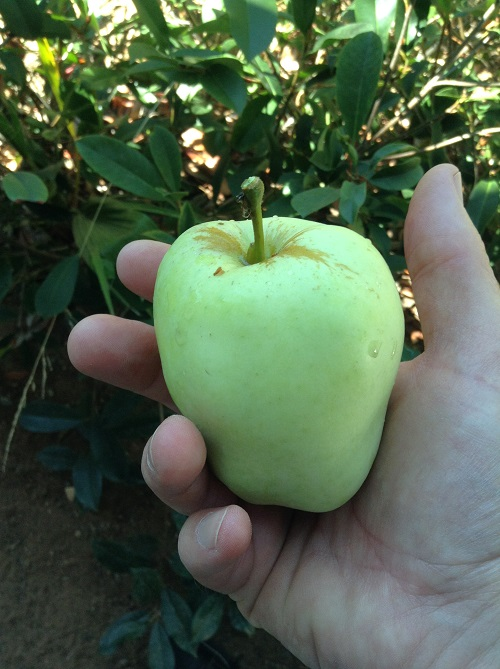 Jeffrey Johnson, Public Health Services, Grows Anna Apples
