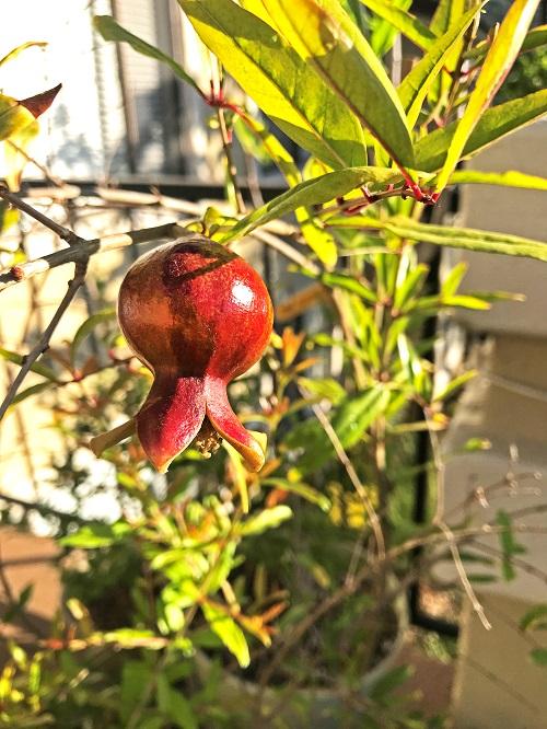 Ashley marquez, parks and recreation, grows pomegranates