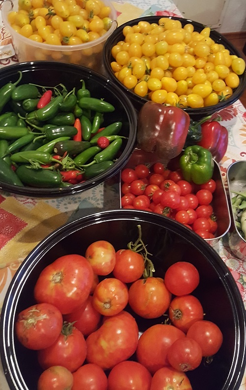 Virginia Exner, Human Resources, grows Tomatoes, cucumbers, peppers, green beans, broccoli, cauliflower, radishes, carrots and herbs